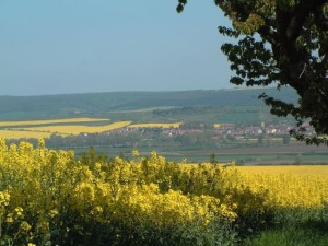 Bild1-Donndorf
